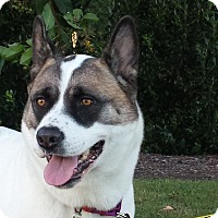 Adopt A Pet :: Pepper Potts - Virginia Beach, VA