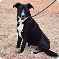 Adopt A Pet :: Buddy - Eden Prairie, MN