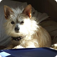 Adopt A Pet :: Lucy - Fort Collins, CO