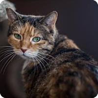 Adopt A Pet :: Lilly - Algonquin, IL