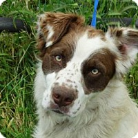 Adopt A Pet :: Freckles - Vacaville, CA