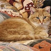 Adopt A Pet :: Yellow - Adams, WI