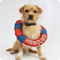 Adopt A Pet :: Hansel - Yucaipa, CA