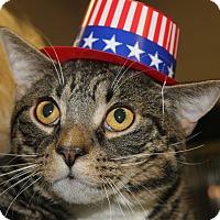 Adopt A Pet :: KIRBY - Clayton, NJ