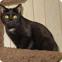 Adopt A Pet :: .Boo - Ellicott City, MD