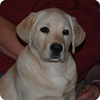 Adopt A Pet :: Daisy - ORANGE COUNTY, CA