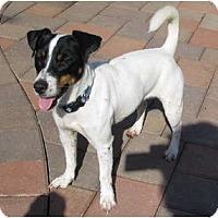 Adopt A Pet :: FIDO - Scottsdale, AZ