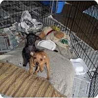 Adopt A Pet :: Milo - Adamsville, TN