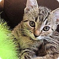 Adopt A Pet :: Charlie - Kirkwood, DE