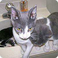 Adopt A Pet :: Cupcake - Scottsdale, AZ