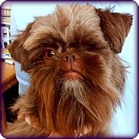 Adopt A Pet :: DAFFODIL - ADOPTION PENDING - Little Rock, AR