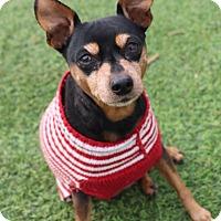 Adopt A Pet :: Bebe - Creston, CA
