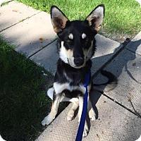 Adopt A Pet :: Murphy - Saskatoon, SK