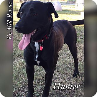 Labrador Retriever Mix Dog for adoption in Hurst, Texas - Hunter