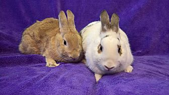 Other/Unknown Mix for adoption in Lewisville, Texas - Kiff and Thumper