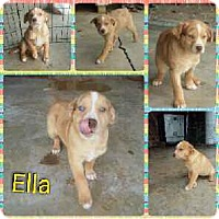 Adopt A Pet :: Ella pending adoption - Manchester, CT