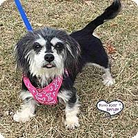 Adopt A Pet :: Pixie - Lee's Summit, MO