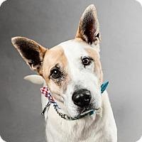 Adopt A Pet :: Ryan Gosling - Armonk, NY