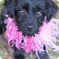 Adopt A Pet :: Pumpkin - Denver, CO