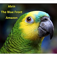 Adopt A Pet :: Alvin The Blue Front Amazon - Vancouver, WA