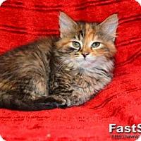 Adopt A Pet :: Juliet - Buford, GA