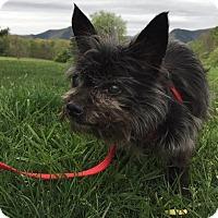 Adopt A Pet :: Jersey: tiny girl! (VA) - Spring City, TN