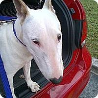 Adopt A Pet :: Matilda - Miami, FL
