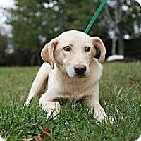 Adopt A Pet :: Johnston - Lancaster, OH