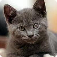 Adopt A Pet :: Lacy - Lancaster, MA