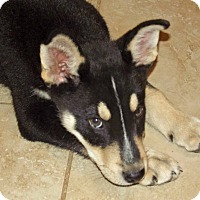 Adopt A Pet :: Zane - Phoenix, AZ