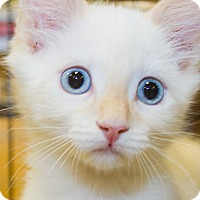 Adopt A Pet :: Haku - Irvine, CA