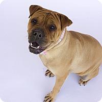 Adopt A Pet :: J Lo - Acton, CA