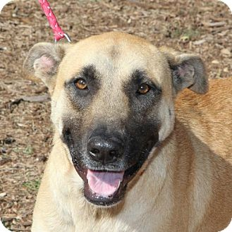 German Shepherd Dog Mix Dog for adoption in Helotes, Texas - Dolly