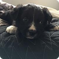 Adopt A Pet :: Finnigan - Detroit, MI