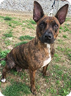 Mixed Breed (Medium) Mix Dog for adoption in Evansville, Indiana - Faith