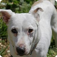 Adopt A Pet :: Kiki - Camden, DE
