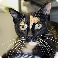 Adopt A Pet :: Twix - Martinsville, IN