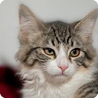 Adopt A Pet :: Precious III - Fountain Hills, AZ
