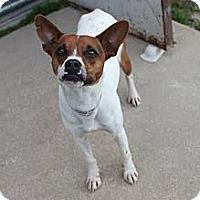Adopt A Pet :: PJ - Sugar Land, TX