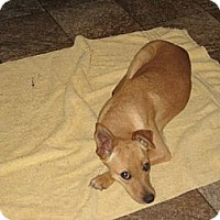 Adopt A Pet :: Candy - Greenville, RI