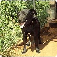 Adopt A Pet :: Max - Anton, TX