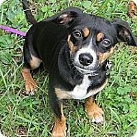 Adopt A Pet :: Toby - Duluth, GA