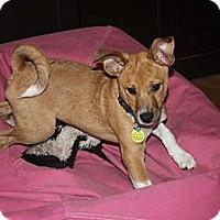 Adopt A Pet :: Finn - Hastings, NY