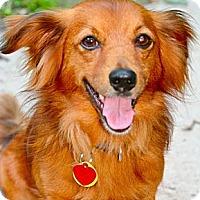 Adopt A Pet :: Hickory - Hastings, NY