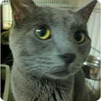 Adopt A Pet :: Dorian Gray - Lombard, IL
