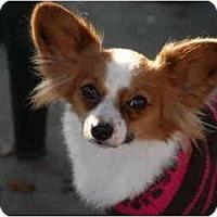 Adopt A Pet :: Lin-Zee - Ft. Myers, FL