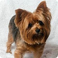 Adopt A Pet :: Tweety - Seminole, FL