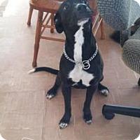 Adopt A Pet :: Rose - Warsaw, IN