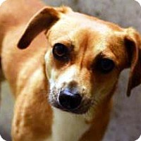 Adopt A Pet :: Willoughby - Bellevue, WA