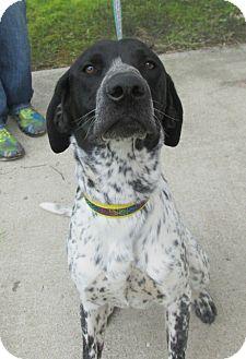 Pointer Mix Dog for adoption in Lake Odessa, Michigan - Bishop